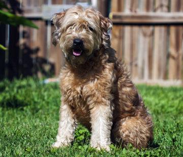 Allergikerhund