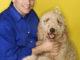 Goldendoodle Hund