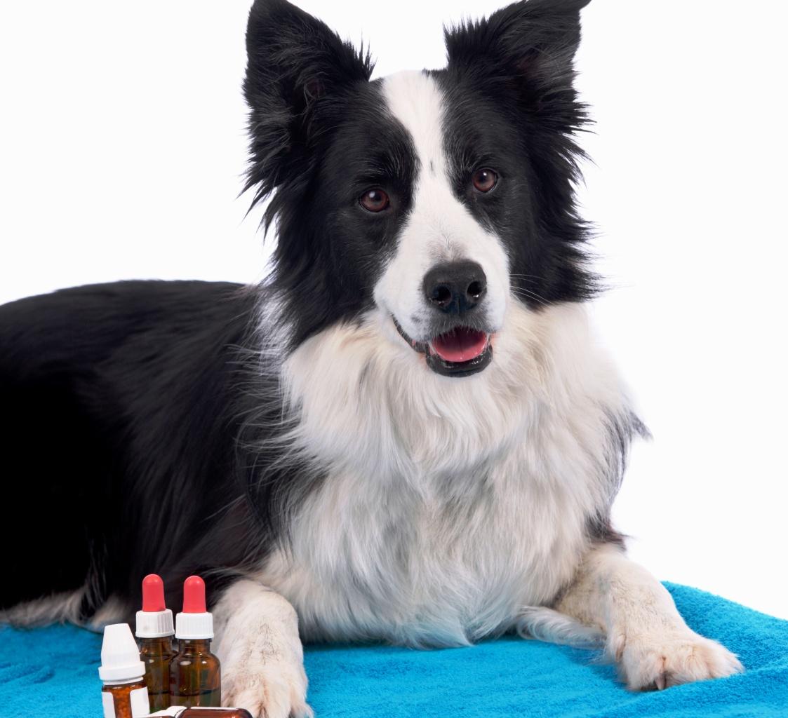 Behandlung Hundeallergie