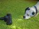 Hundehaare Staubsauger für Allergiker
